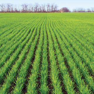 winter-2016-stimulate-the-development-of-the-root-system-and-increase-the-immunity-of-grain-crops