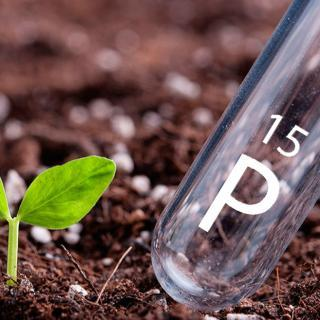 two-forms-of-phosphorus-in-plant-nutrition