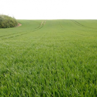foliar-nutrition-of-winter-cereals-at-the-beginning-of-stem-elongation-phase